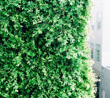להמשך קריאה - קיר ירוק – כך תעשו זאת בעצמכם