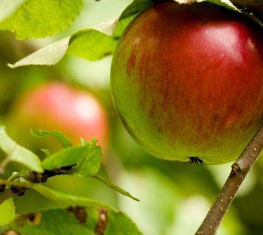 להמשך קריאה - 10 עצי פרי מומלצים לגינה