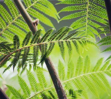 להמשך קריאה - מורינגה – העץ שעליכם להכיר