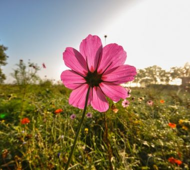 להמשך קריאה - האביב כבר פה – 10 צמחים מומלצים לשתילה