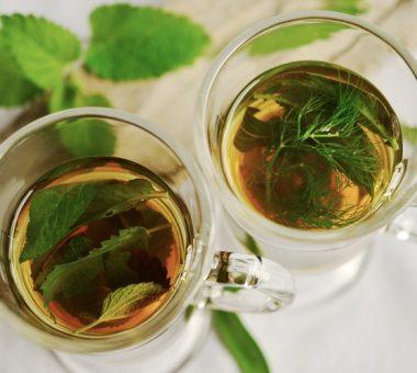 להמשך קריאה - 10 צמחי מרפא שאתם חייבים בגינה שלכם!