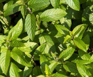 להמשך קריאה - 10 צמחים עם פריחה ריחנית לחודשי הקיץ