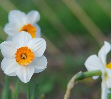 להמשך קריאה - צמחים ושיחים ריחניים לגינה ולמרפסת