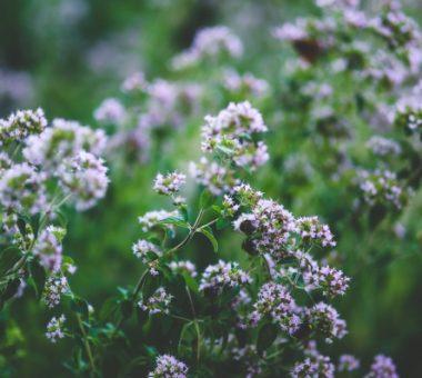 להמשך קריאה - 5 שיחים וצמחים ריחניים ללילות קיץ קסומים בחצר שלכם