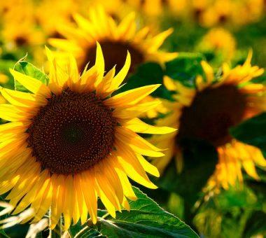 להמשך קריאה - 10 צמחים לשתילה לקראת הקיץ