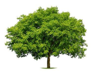 להמשך קריאה - על עצים, בטיחות ויציבות ענפים