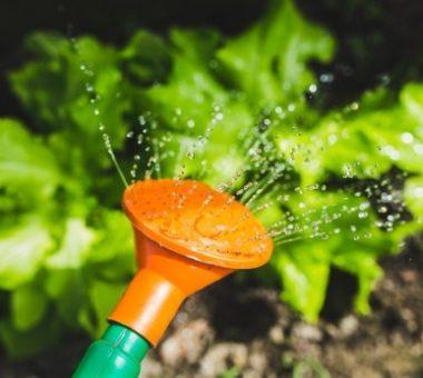להמשך קריאה - סוגי השקיה שונים לגינות